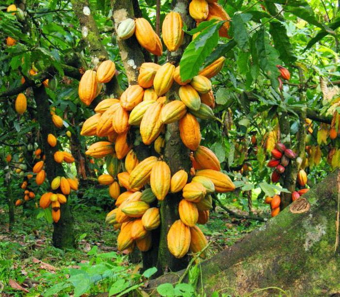 plante locale pentru pierderea în greutate din ghana)