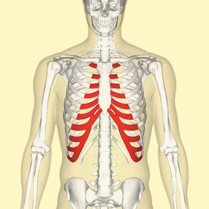 pregătirea elastică a țesutului cartilaj)