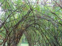 Living Willow Tunnel by Mike Dodd