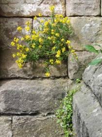 walls11