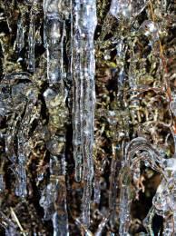 My garden was encased in ice in 2013.