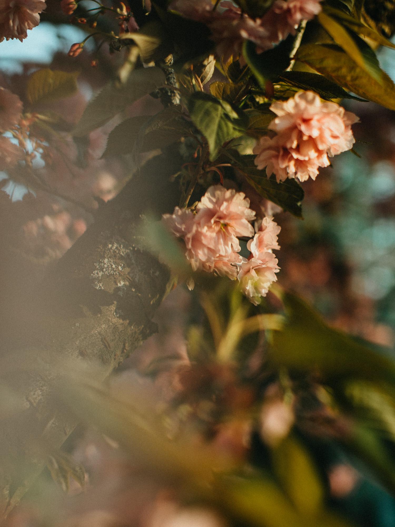 journal photographie confinement - photographe portrait rouen - sylvain marchand - portraits naturels - photographe lifestyle - seance photo lifestyle - portraits artistiques normandie
