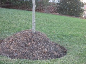 young-tree-mulch-volcano
