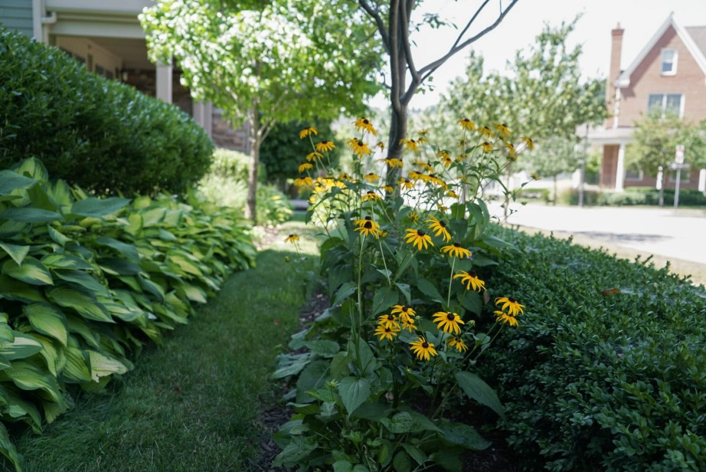 Landscape-Maintenance-Sylvan-Gardens