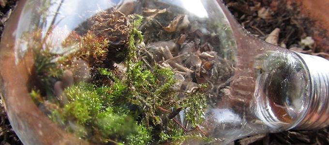 featuredimage-terrarium