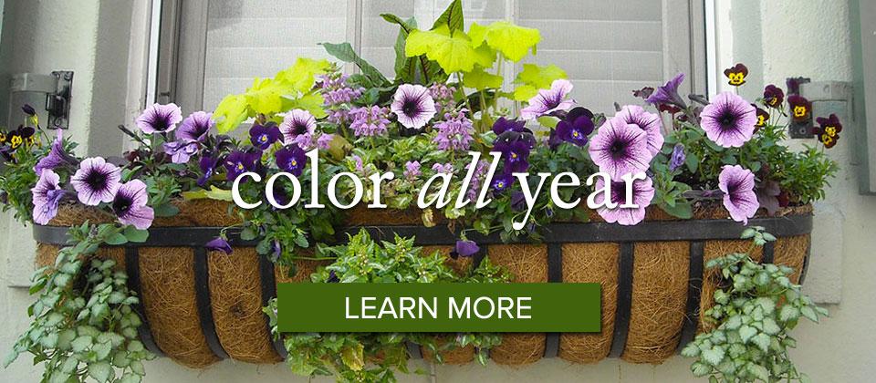 colorallyear_slider