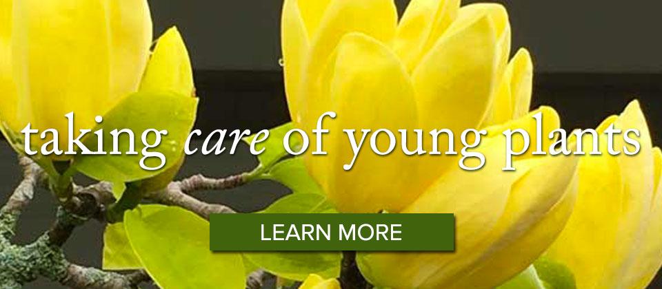 youngplants_slider