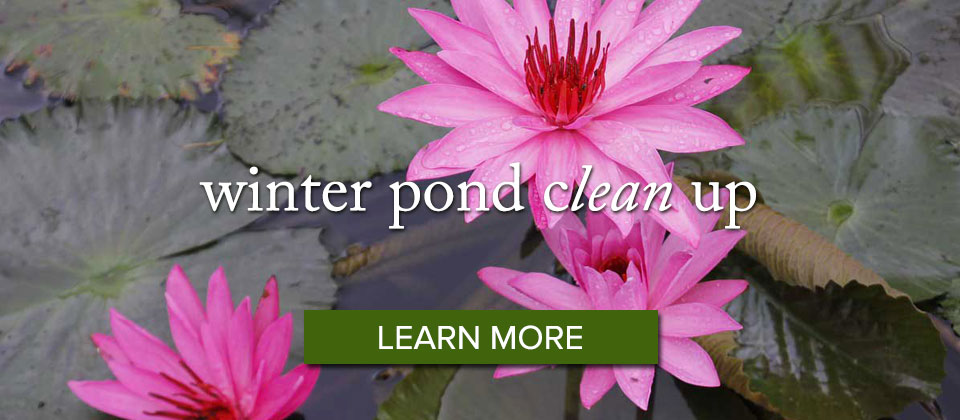 pond_learnmore