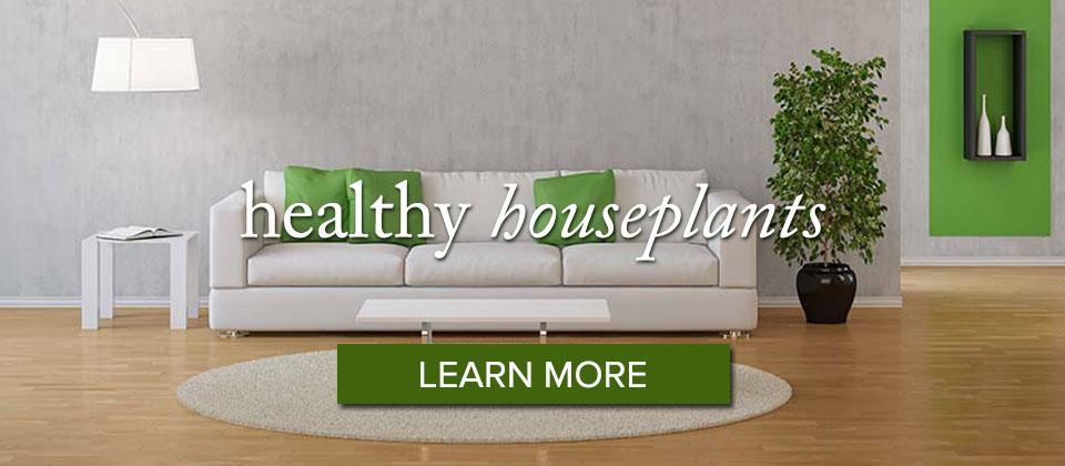 houseplants_learnmore