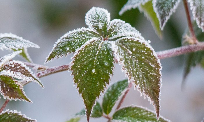 wintergarden_blank