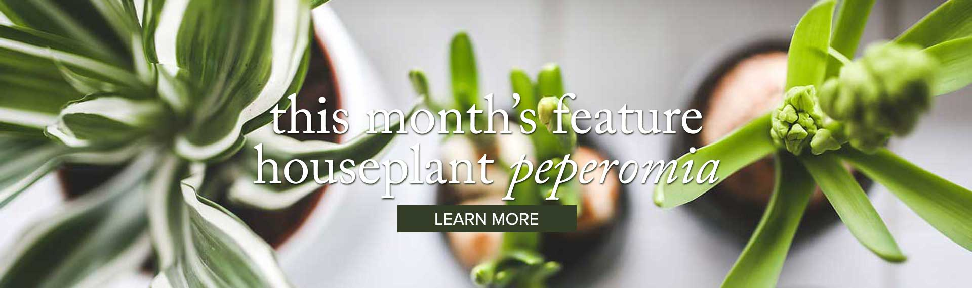 houseplant_LEARN