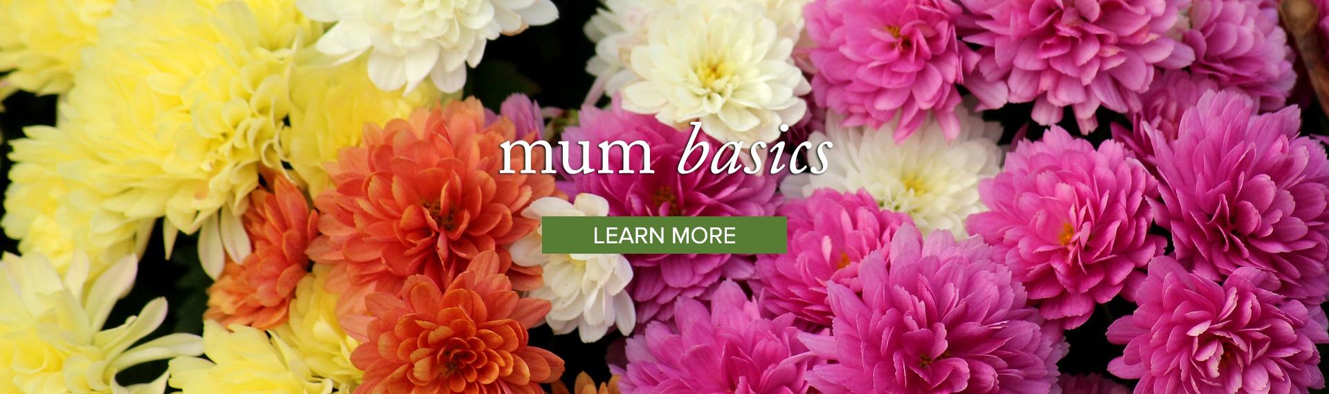 Mum_LEARN