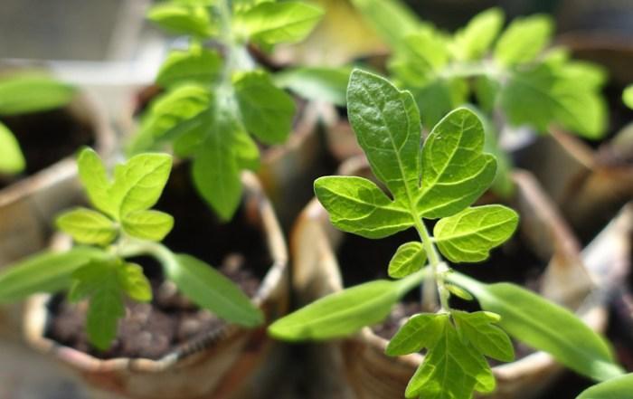 seeds-of-joy