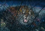 ZENG FANZHI (B. 1964) THE TIGER —
