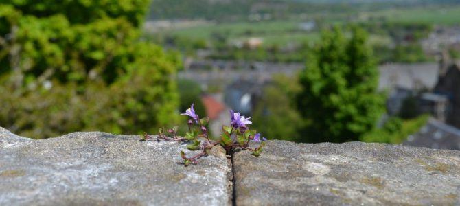 Stirling Castle und der Weg Richtung Highlands