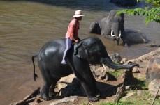 Elefantencamp