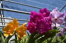 Orchideen Farm