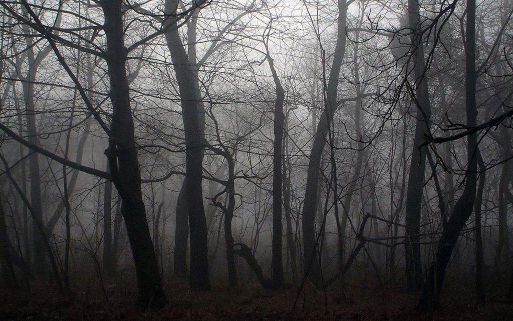 arbres foret meilleurs thrillers psychologiques livres romans policiers sylvie bardet