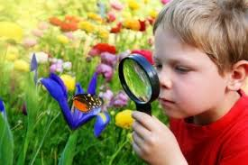 Montessori observation de la nature