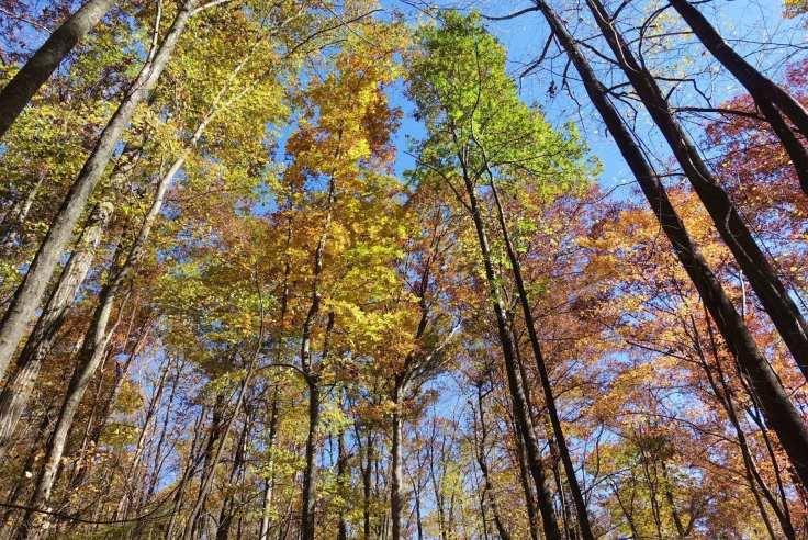 I love fall in South Carolina