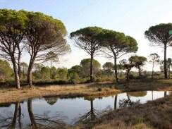 SYMBIODIV Votre bureau d'études et de conseils en écologie Zones humides Zone humide réglementation projet d'aménagement pédologie délimiter une zone humide délimitation d'une zone humide critère végétation critère habitat compensation destruction Caractérisation