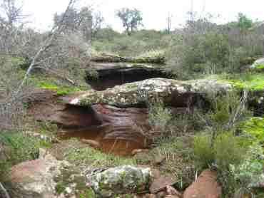 SYMBIODIV Votre bureau d'études et de conseils en écologie ZSC ZPS Natura 2000 évaluation des incidences espèces d'intérêt communautaire