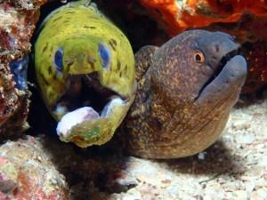 Moray Eel, spotted eel, Scott Penwarden
