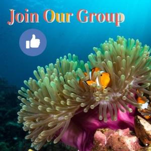 Marine Animal Behavior and Symbiotic Relationships Facebook Group