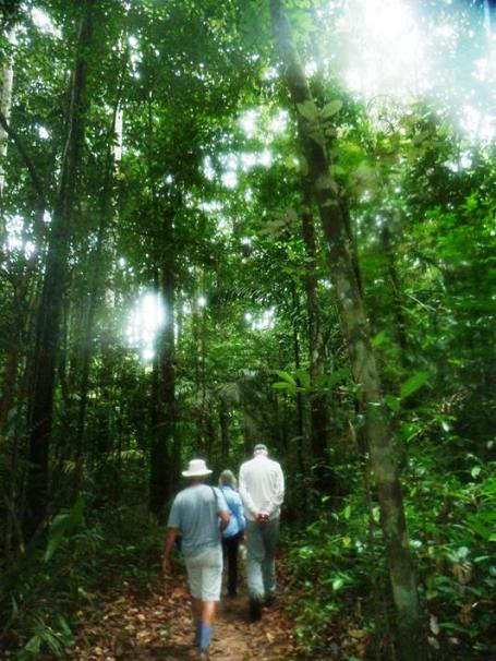 Walking through the primary rain forest