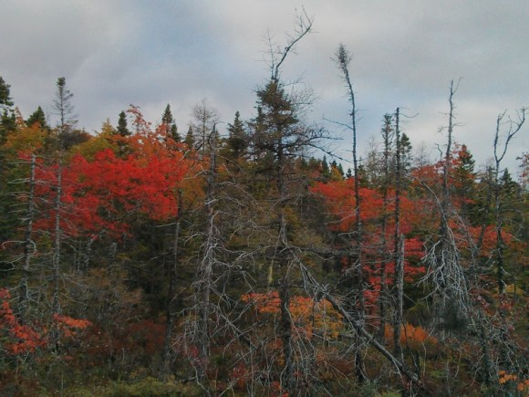 The reds, dark greens and dead trees in counterpoint