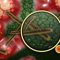 La OMS aprueba un plan global para combatir la resistencia antimicrobiana