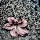 bsag-406-2014-ashley-lily-scarlett