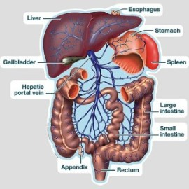 Liver-Colon connection