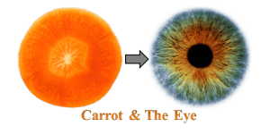 carrot-and-the-eye