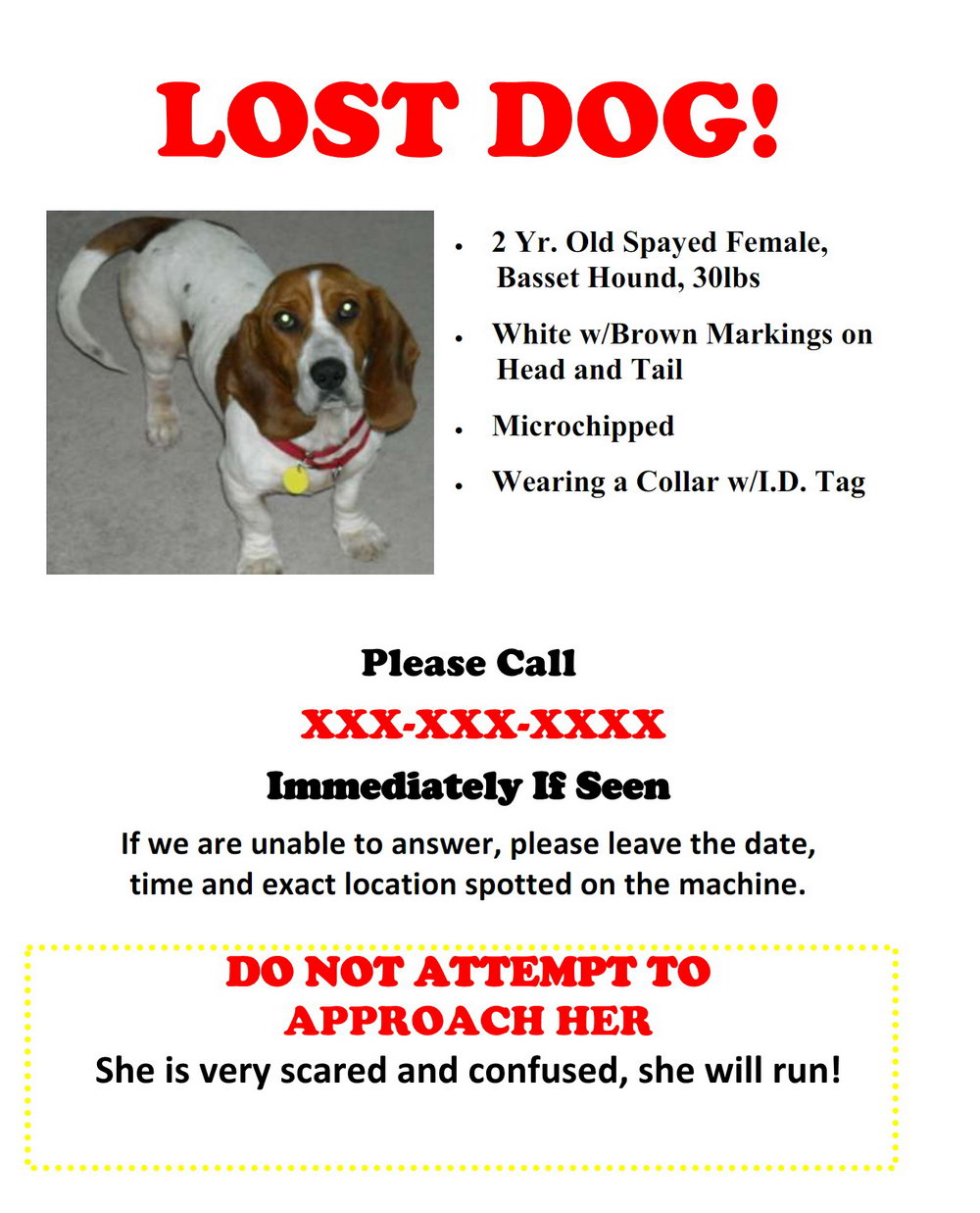 Lost Dog Flyer Template Free