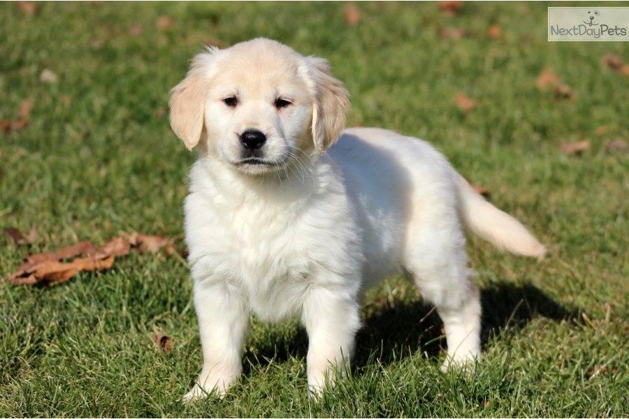 Service Dog Registration Template
