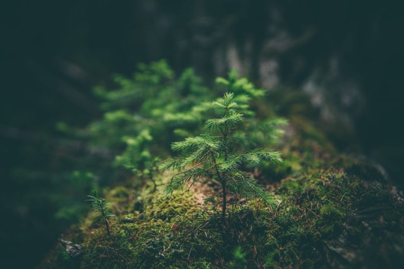 Maison verte : lessive écologique et économique avec 3 ingrédients - Synergie Corps et Esprit - Lescar - Béatrice Cabrera