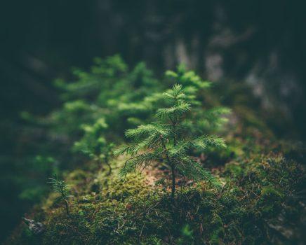 Maison verte : lessive écologique et économique avec 3 ingrédients