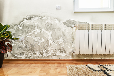 Mold Removal Professionals! Contact Synergy Response, serving Austin, Texas and area.
