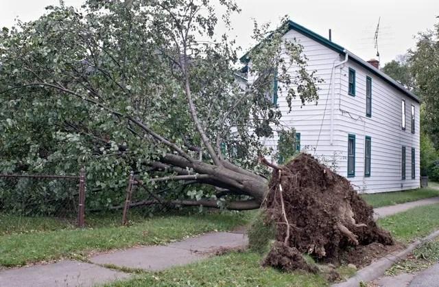 Wind and Storm Damage Restoration Professionals!