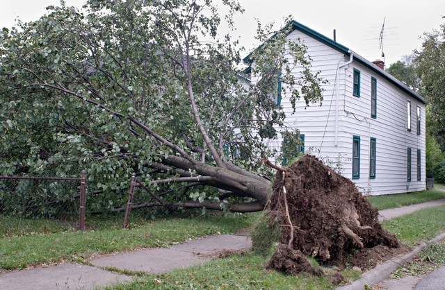 Wind and Storm Damage Restoration Professionals!