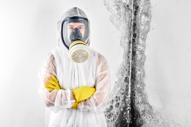 Synergy Response Understands Mold Removal!