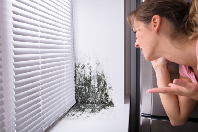 If You Find Mold Stay Calm and Call Synergy Response - 512-675-4224!