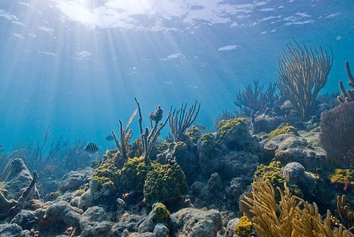 Biscayne_underwater_NPS1