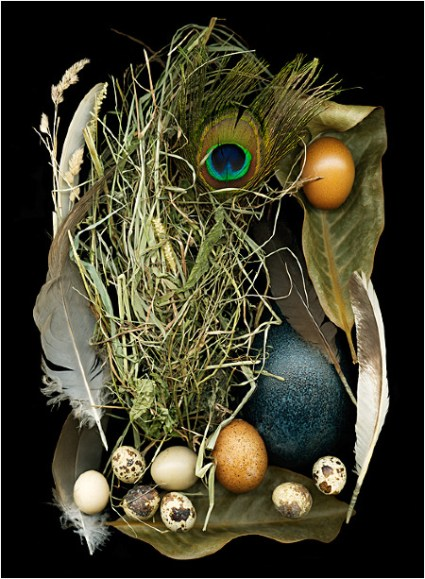 Eggzotica © Ellen Hoverkamp Used in accordance with Fair Use Policy for educational and analytic purposes.