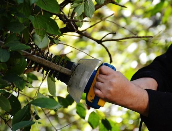 bush-972972_960_720.jpg
