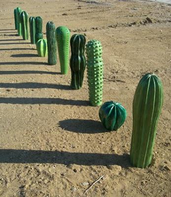 Cactus 101