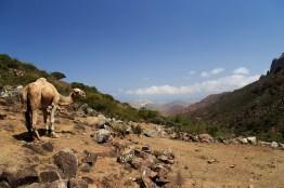 Trekking Companion, Socotra, Yemen