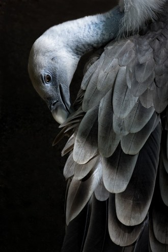 zoo-1130670_640