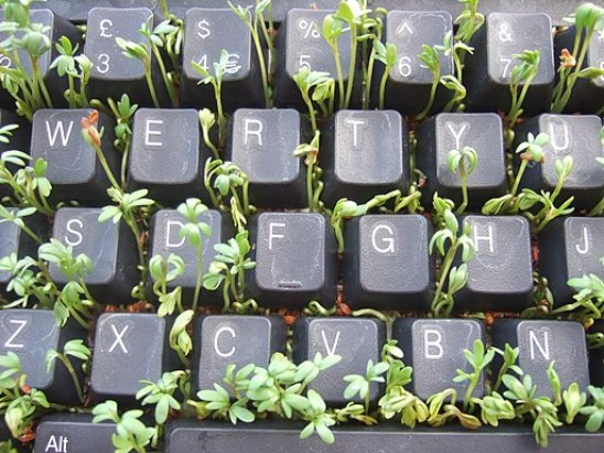 512px-Cress_keyboard-3_sprouting_top